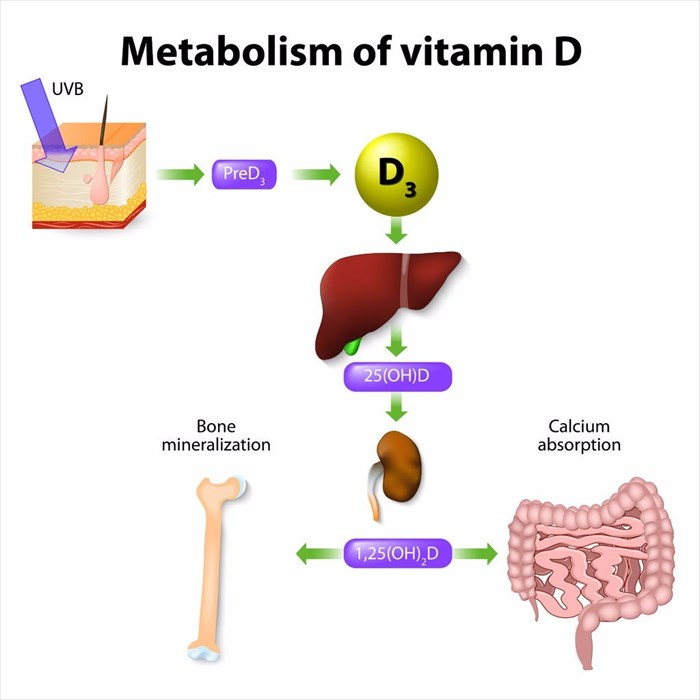 What is vitamin D used for in the body and how does it work?