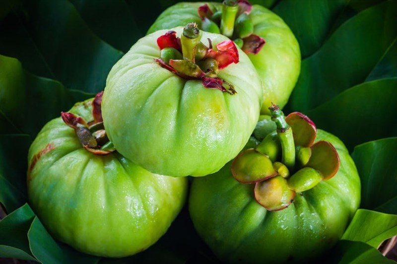 Garcinia Cambogia Everything You Need To Know About This Popular